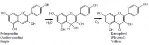 ساختار شیمیایی زعفران