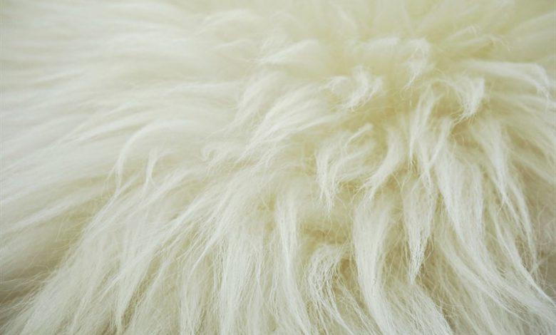 پشم گوسفند